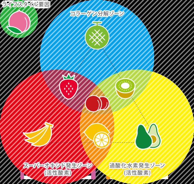 肥満関連遺伝子×ライフスタイル解析
